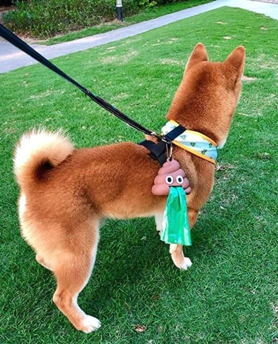 Dog wearing a leash with the poop emoji waste dispenser holder