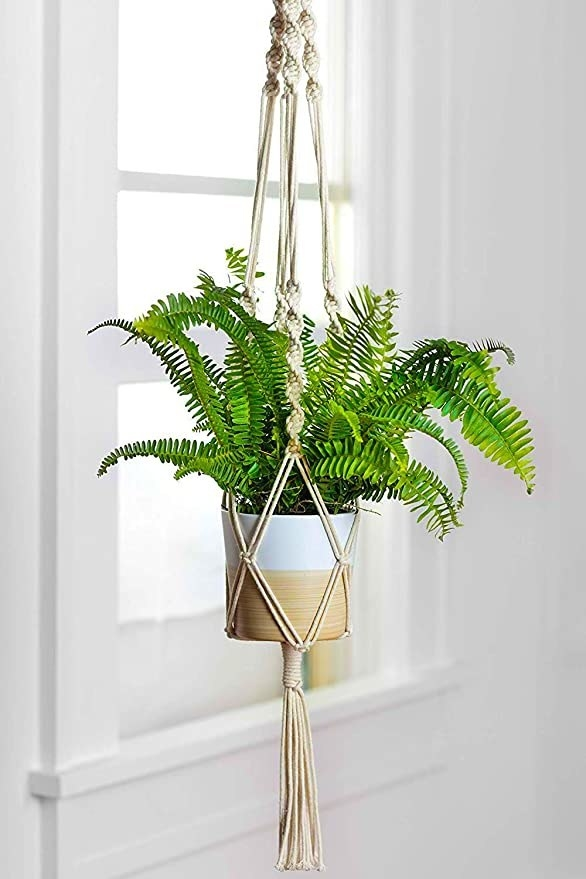 Potted plant in the macrame hanger.