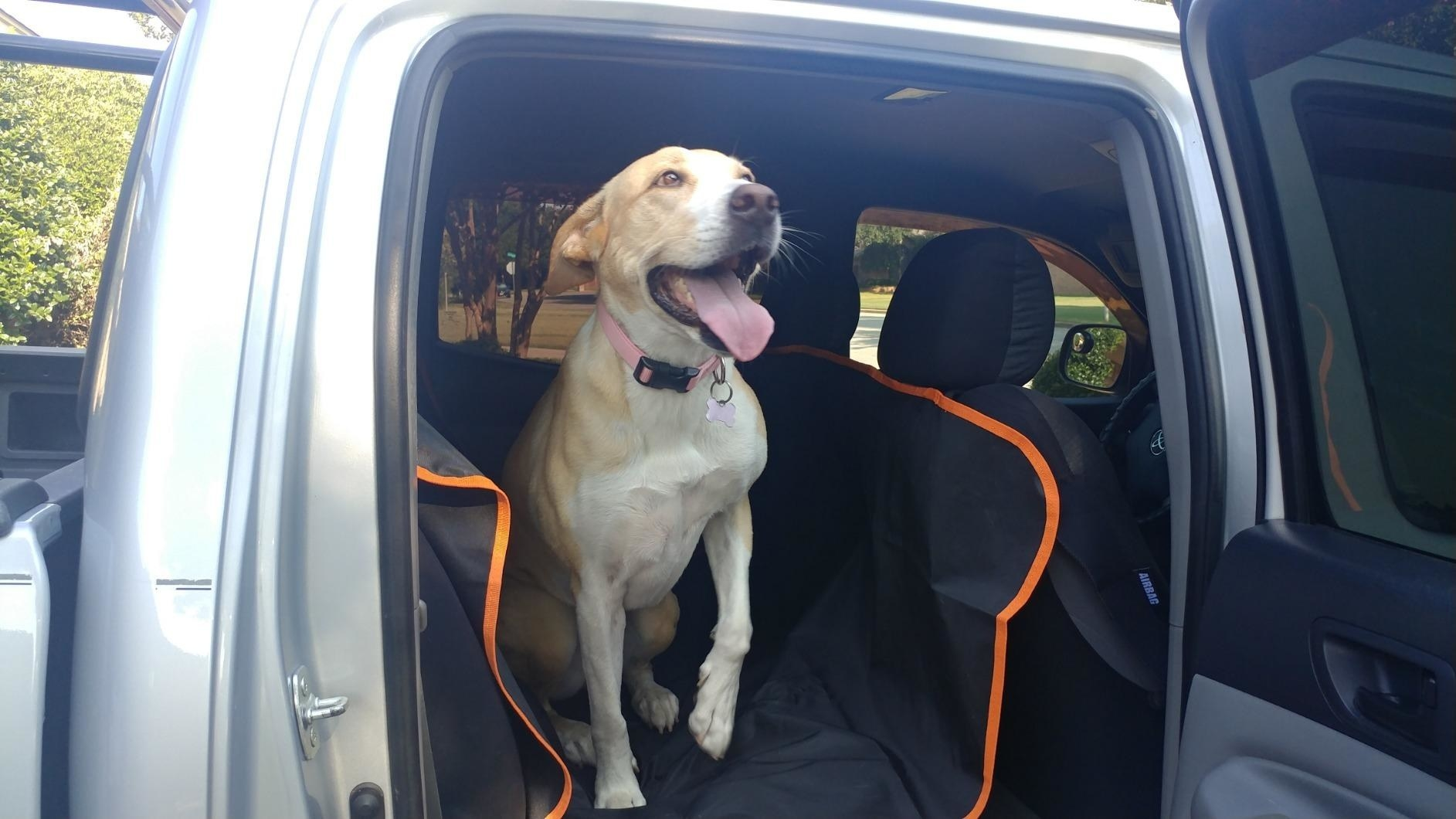 Dog sitting on black and orange seat cover