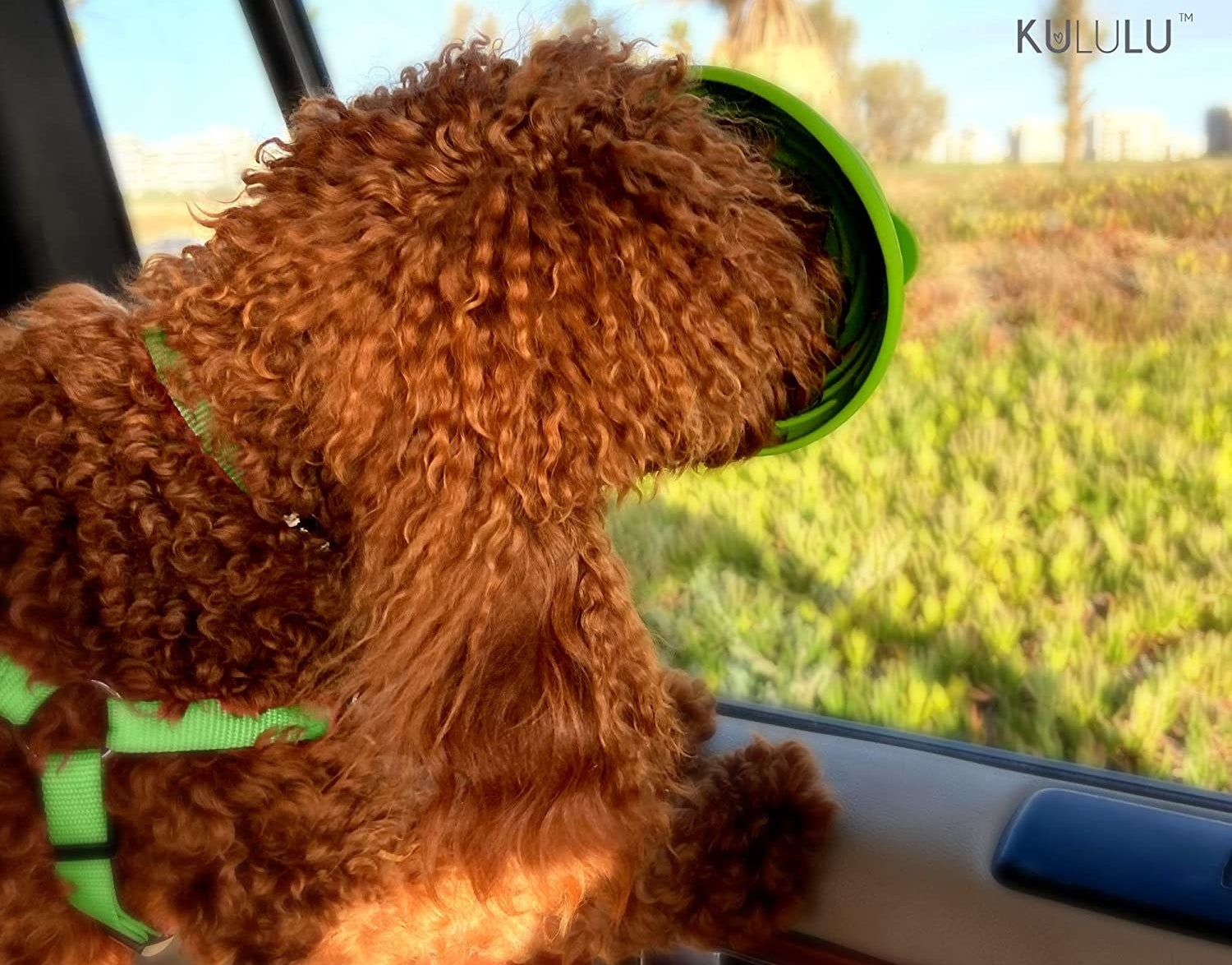 Green textured bowl suctioned to car window with dog licking it