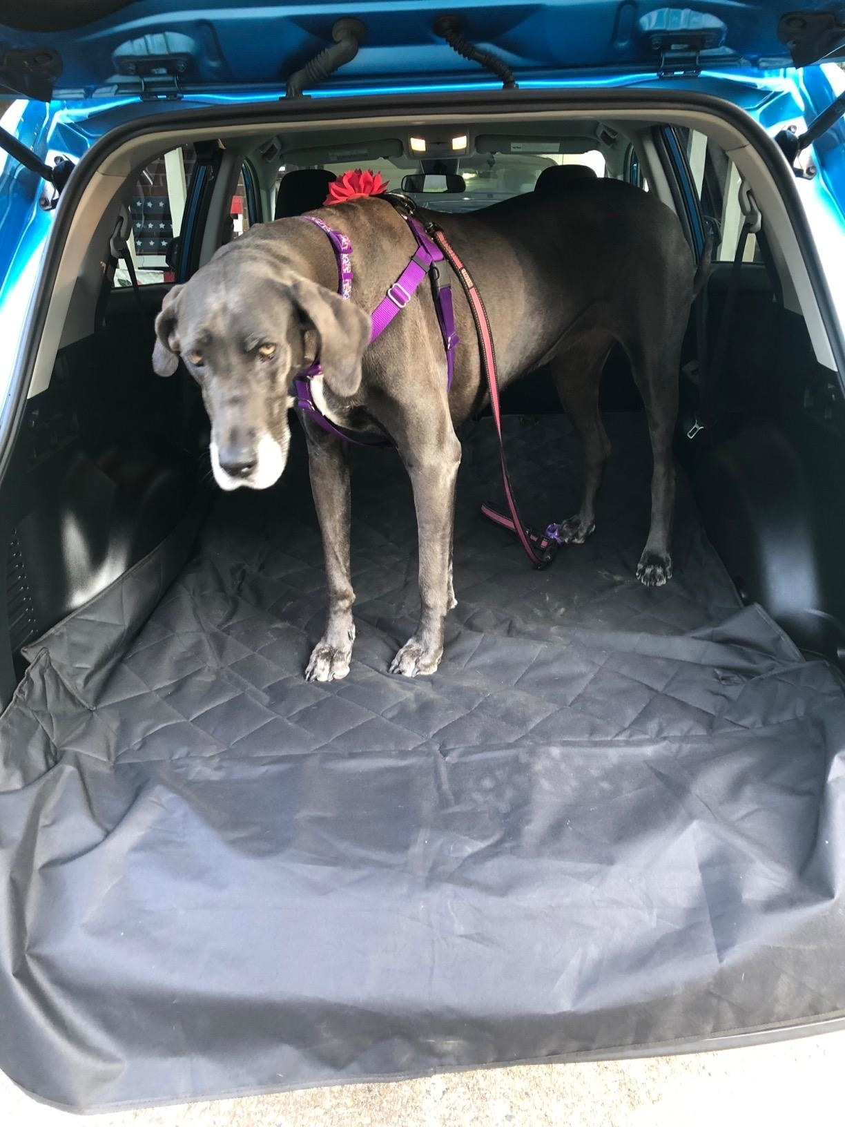 Reviewer's photo of dog on quilted cargo protector