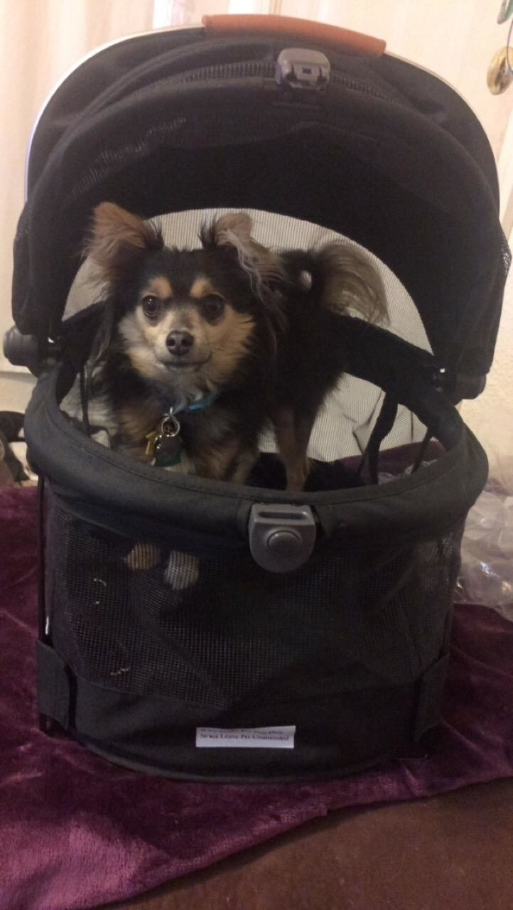 Reviewer's dog sitting in black carrier with handle