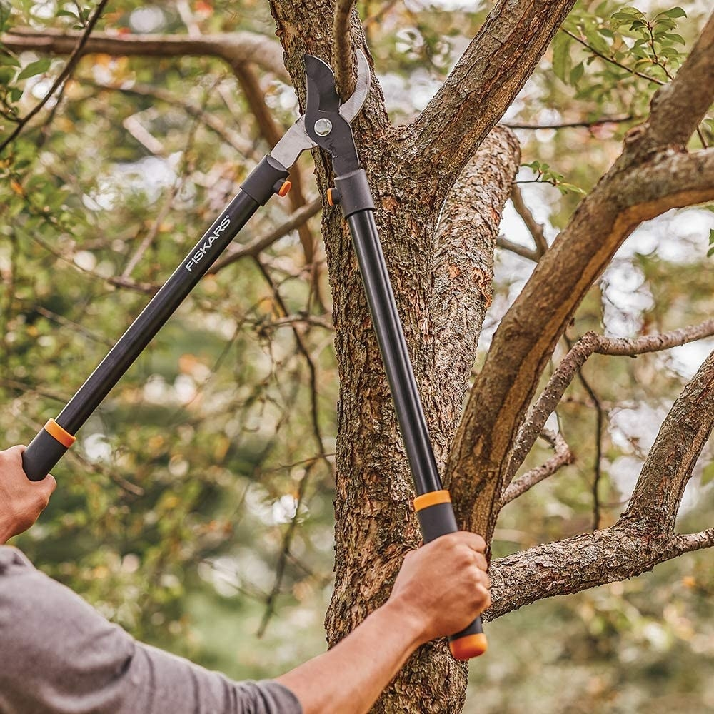 Hands trimming a tree branch with the lopper