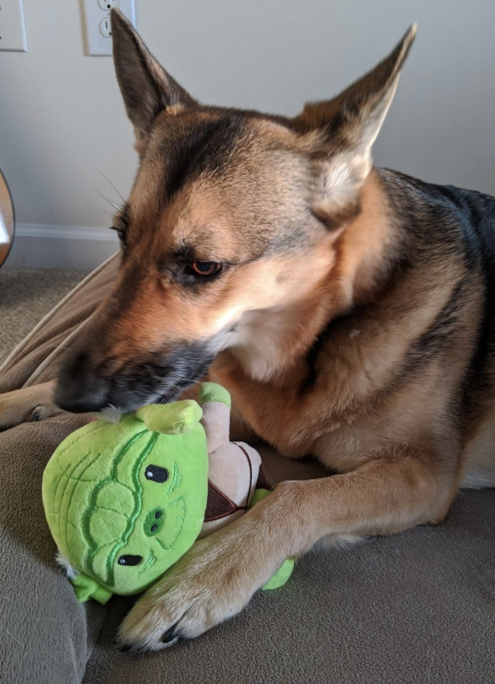 a german shepard chewing on a green, brown, and beige stuffed Yoda toy