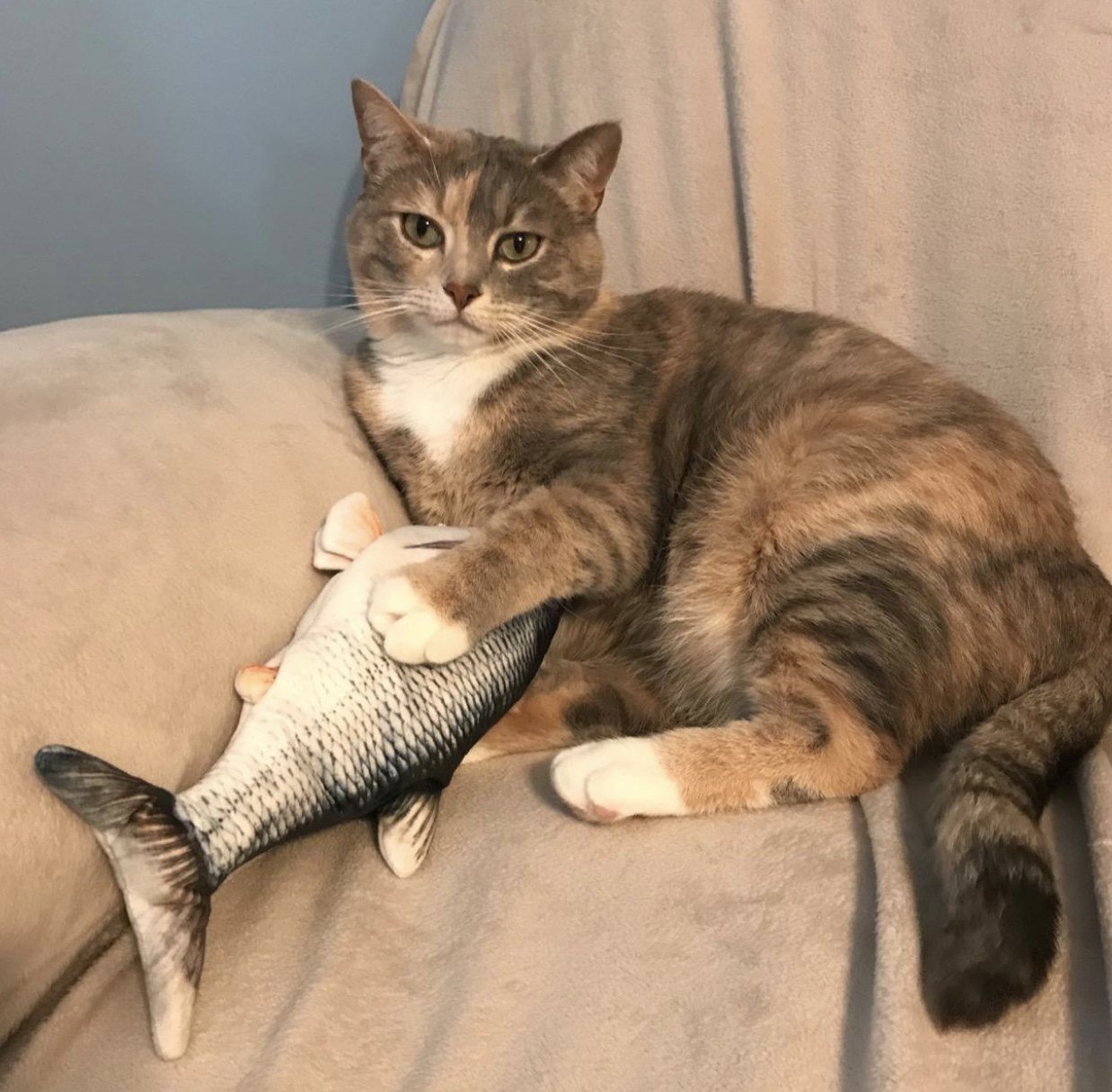 A brown and orange striped cat with a silver flopping fish toy in between their paws