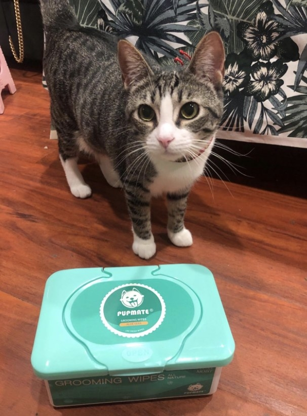 Cat poses with wipes