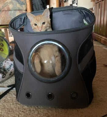 A cat sitting in a backpack with a plastic bubble