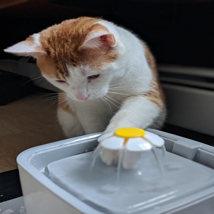 Reviewer photo of their cat dipping its paw in the fountain