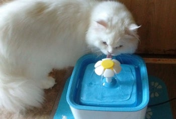 Reviewer photo of their cat sniffing the fountain