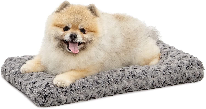 A tan Pomeranian on a small gray bed