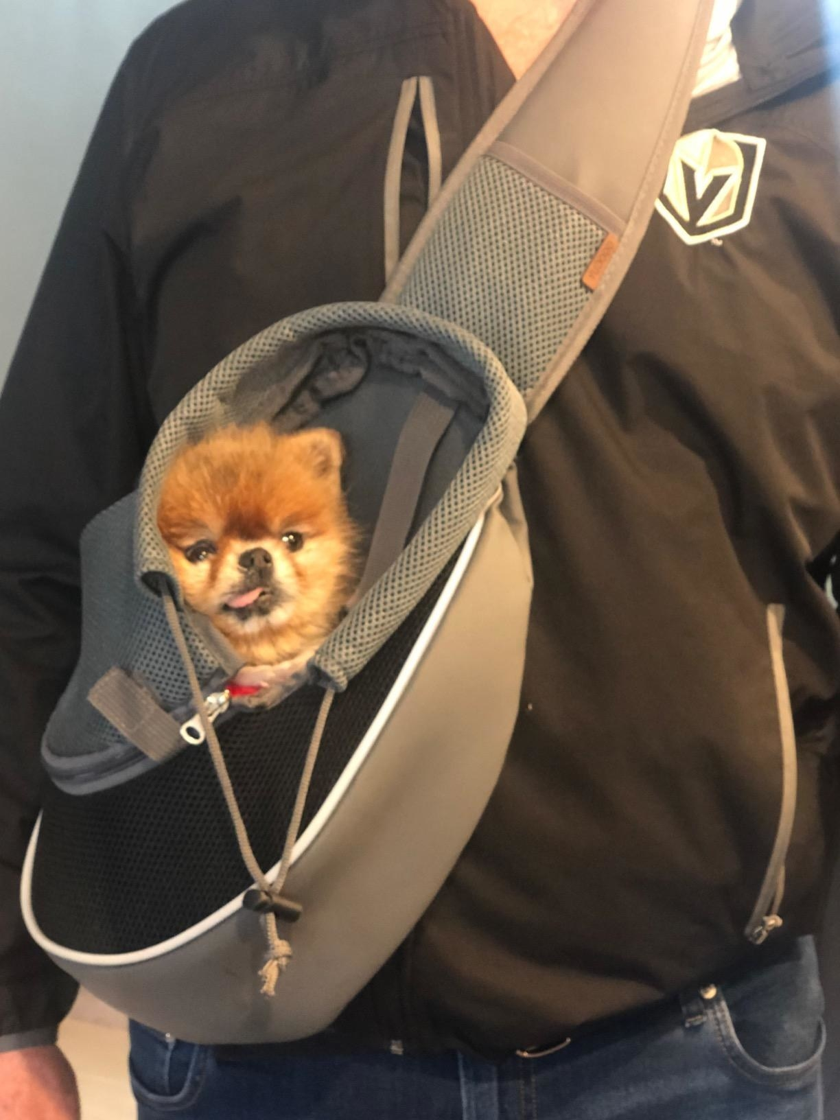 A reviewer's photo of a black and gray shoulder sling bad with a tan Pomeranian sticking its tongue out