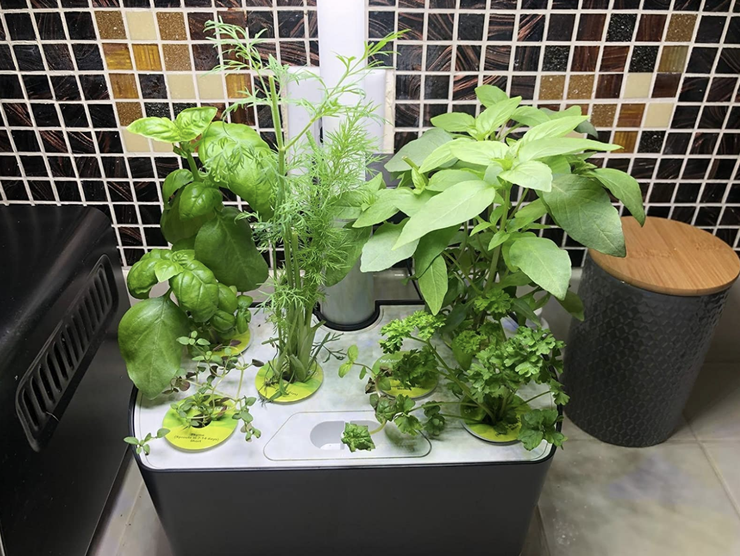 Reviewer's AeroGarden on their counter with tons of fresh herbs that have grown