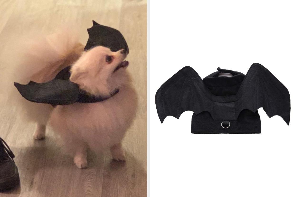 Split image of a reviewer's white Pomeranian wearing black bat wings costume