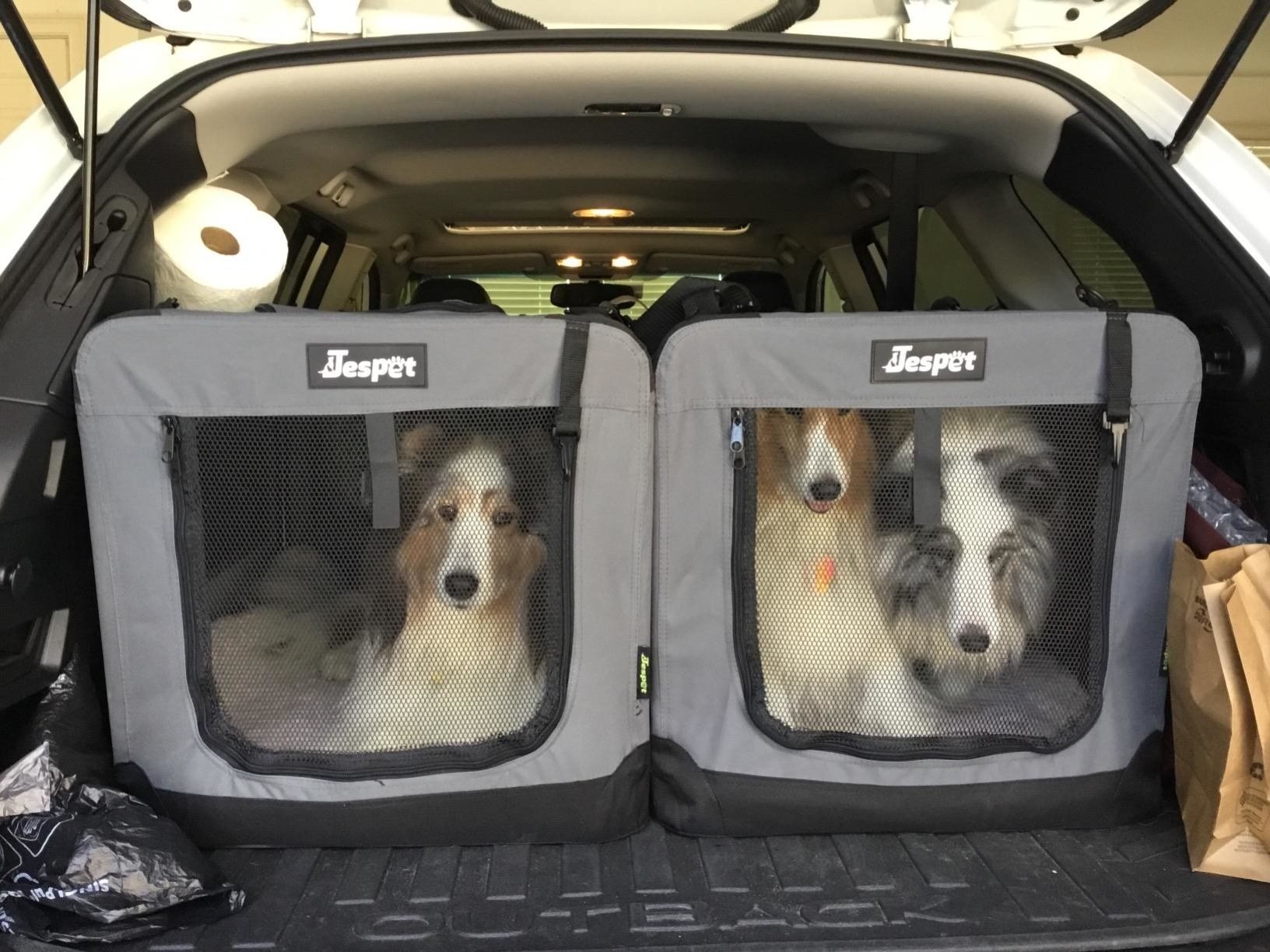 Two gray crates with mesh windows in back of car with three dogs inside