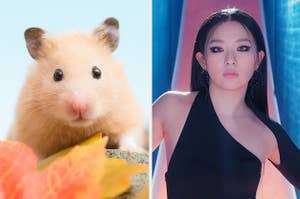 An image of a cute hamster next to an image of Seulgi from Red Velvet
