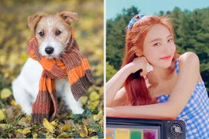 An image of a puppy in a scarf next to an image of Joy smiling as she rests her head on her hands
