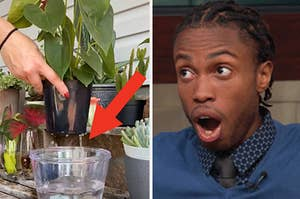 A plant being watered next to a shocked face