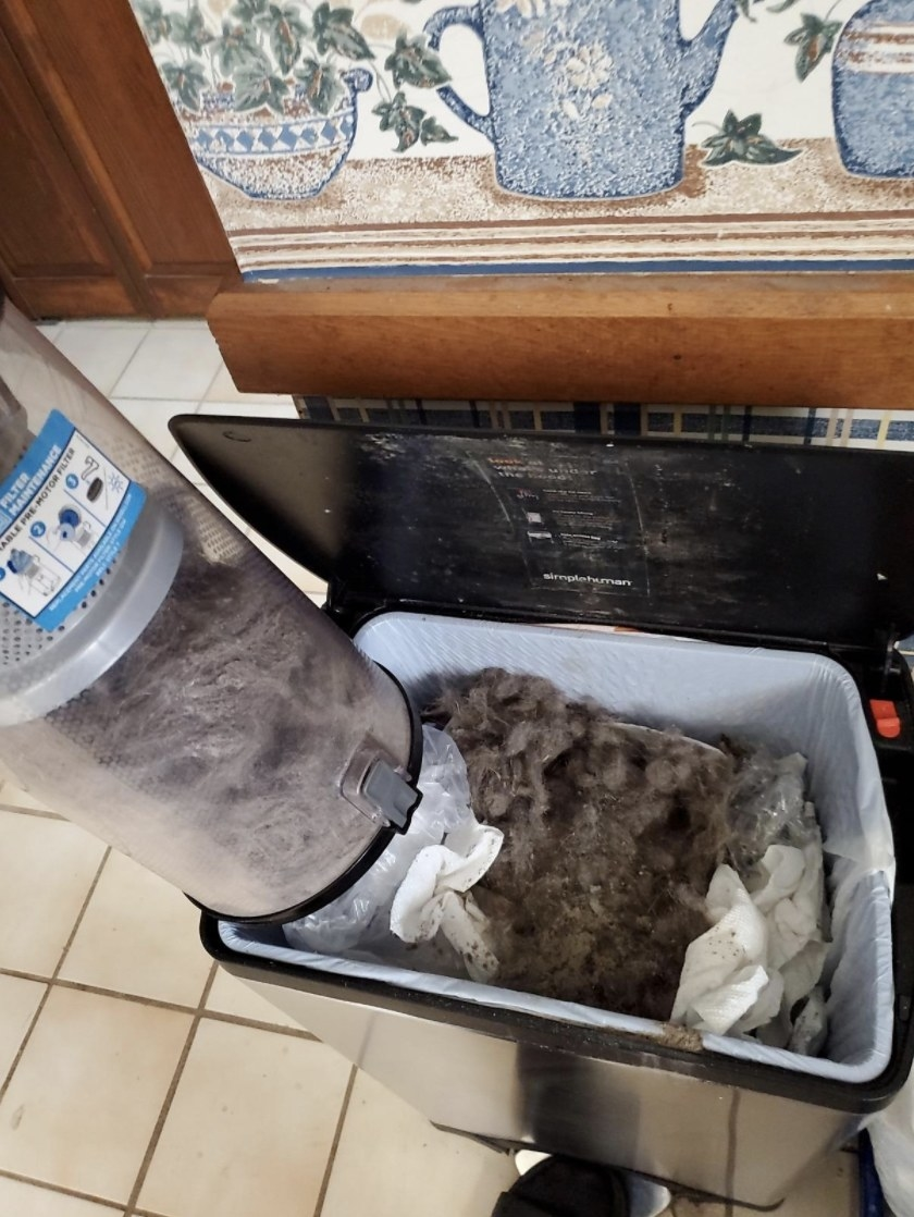 The vacuum's dirt bin being emptied of large amounts of hair into the garbage can