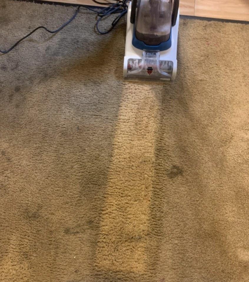 The carpet cleaner cutting a bright, clean line on a dark, dirty carpet