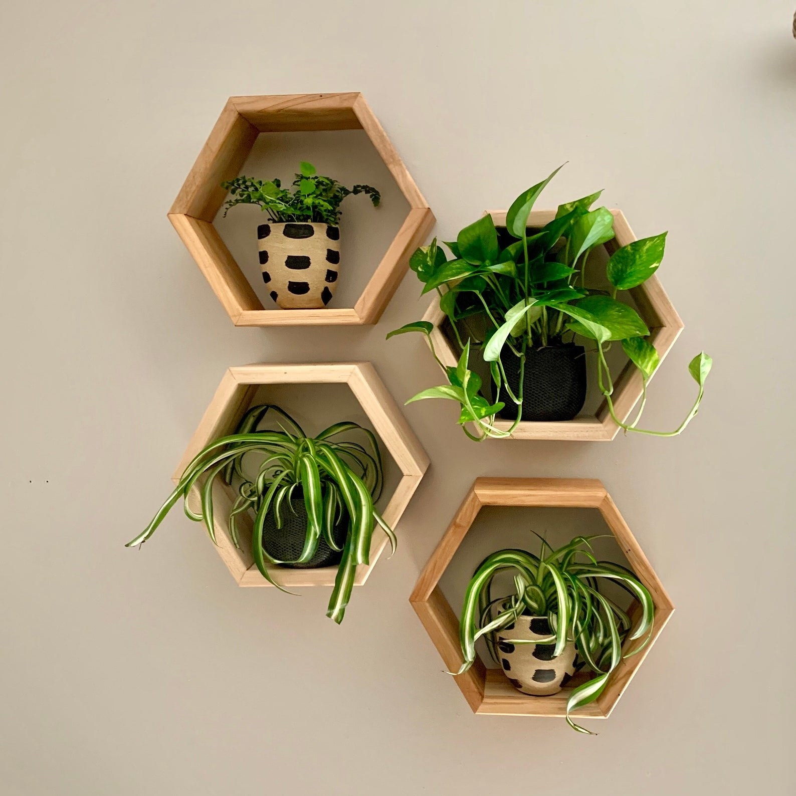 Hexagonal shaped wall frames with small potted plants on them