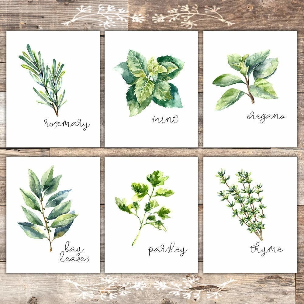 Six white pictures featuring art of rosemary, mint, oregano, bay leaves, parsley, and thyme.