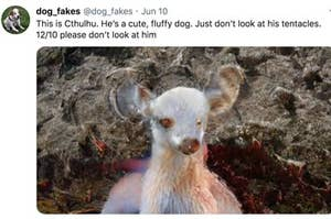 A tweet with an image of an AI-generated dog that looks like a mix between a dog and a lamb