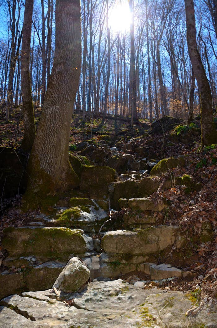 Rocky riverbed gully in hardwood forest with sun streaming through trees