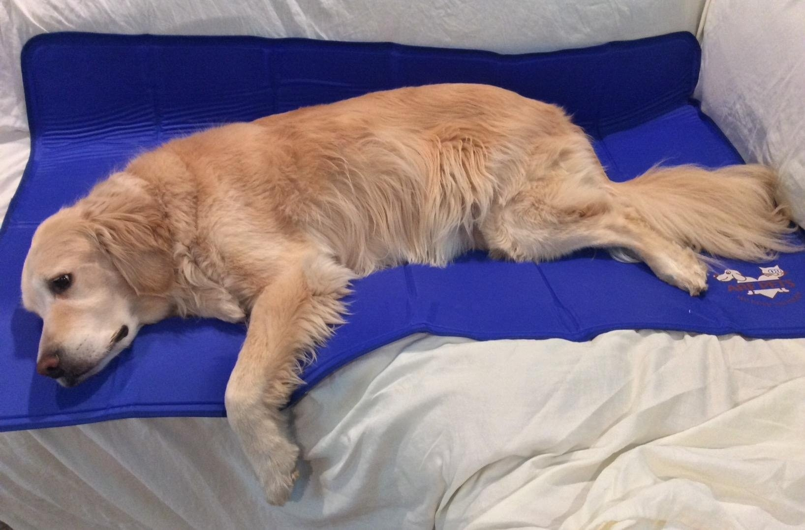 The mat, fully laid out on a couch, with an 85 pound golden retriever fitting onto it comfortably