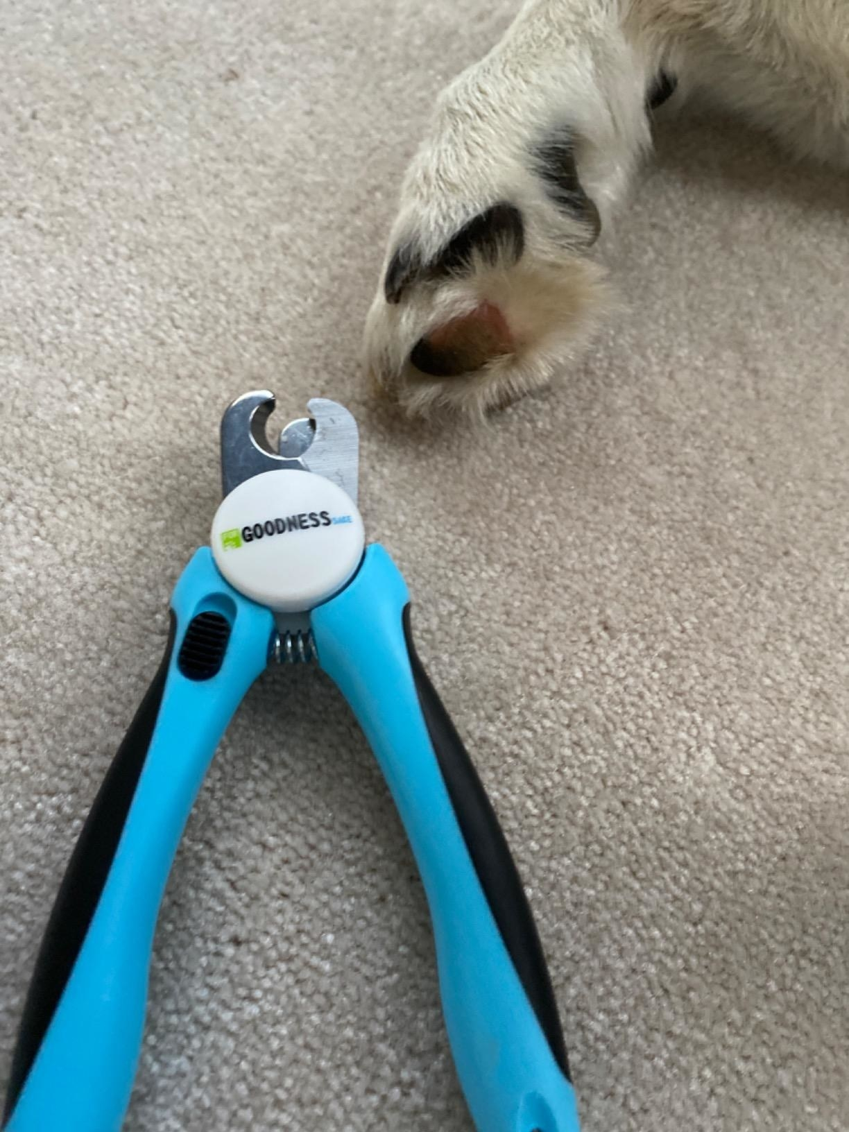 The nail clipper, opened to show size of clipper area in comparison to dog paw