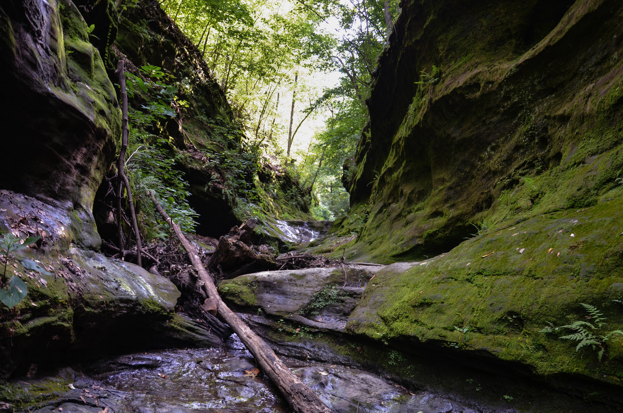 A rugged hiking trail through moss-covered rocks