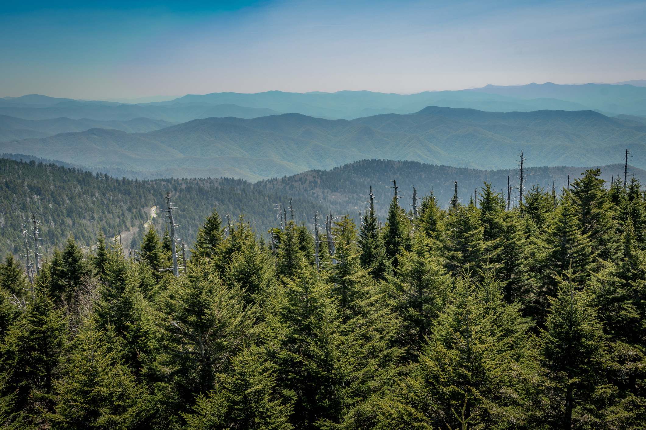 View From Clingman's Dome looking over a forest of fir trees on the mountains