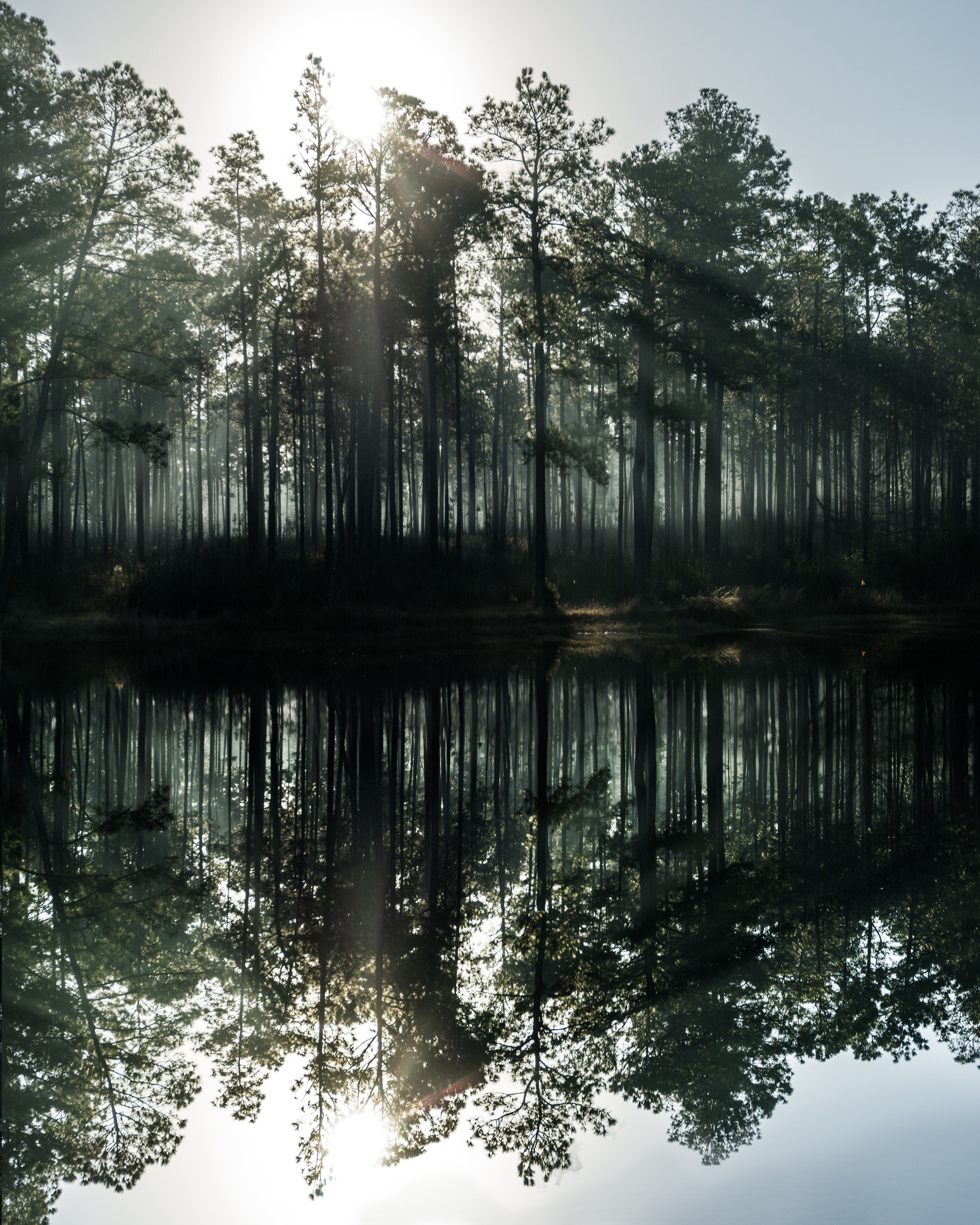 The sun rises through the trees in front of a lake in the DeSoto National Forest in Mississippi