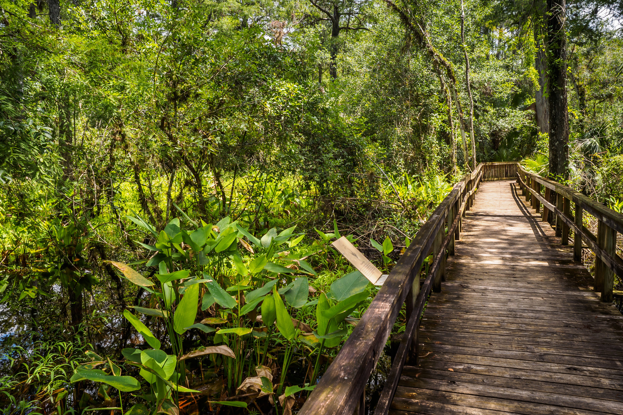 A wooden boardwalk winds through lush vegetation
