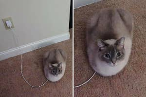 A cat sitting on a phone charger so it looks like the cat is plugged into the wall