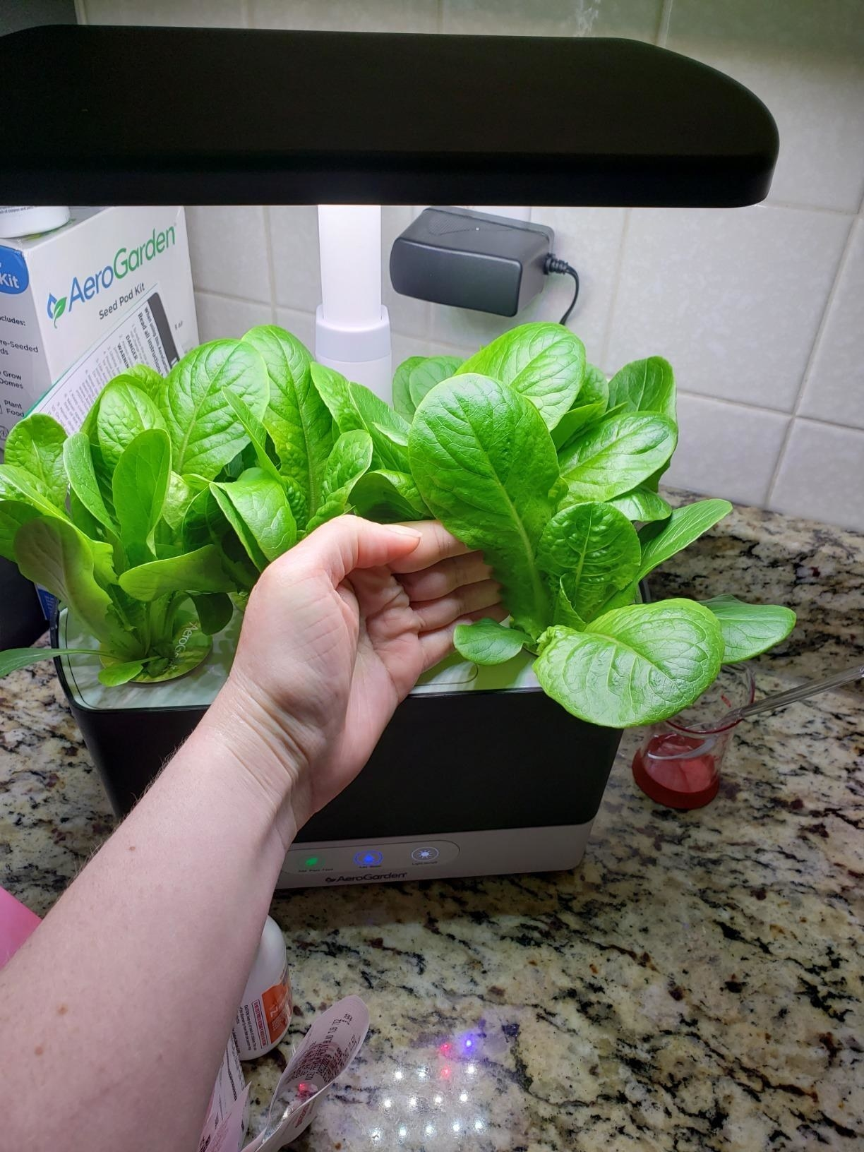 Reviewer pic of the black Aerogarden on a counter with lettuce leaves growing in it and their hand on one of the leaves, showing how big it's growing