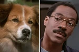 A dog is on the left with Eddie Murphy tilting his head on the right