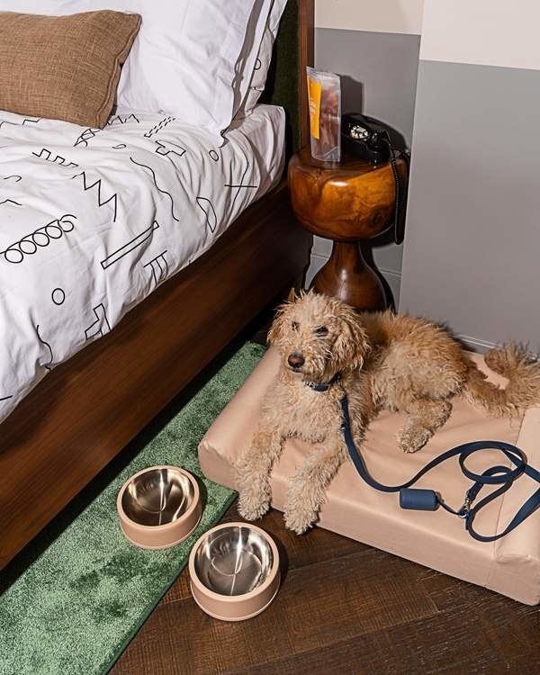 The tan rectangle dog bed with raised sides and matching bowls in front of it with a dog lying on it.
