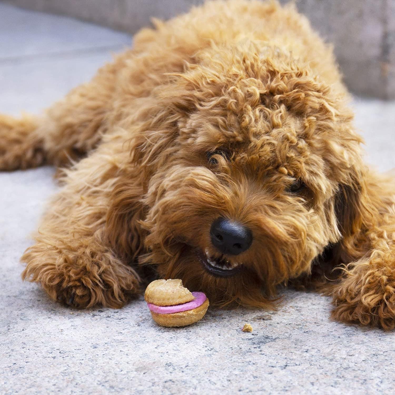 A dog eating a pink macaron