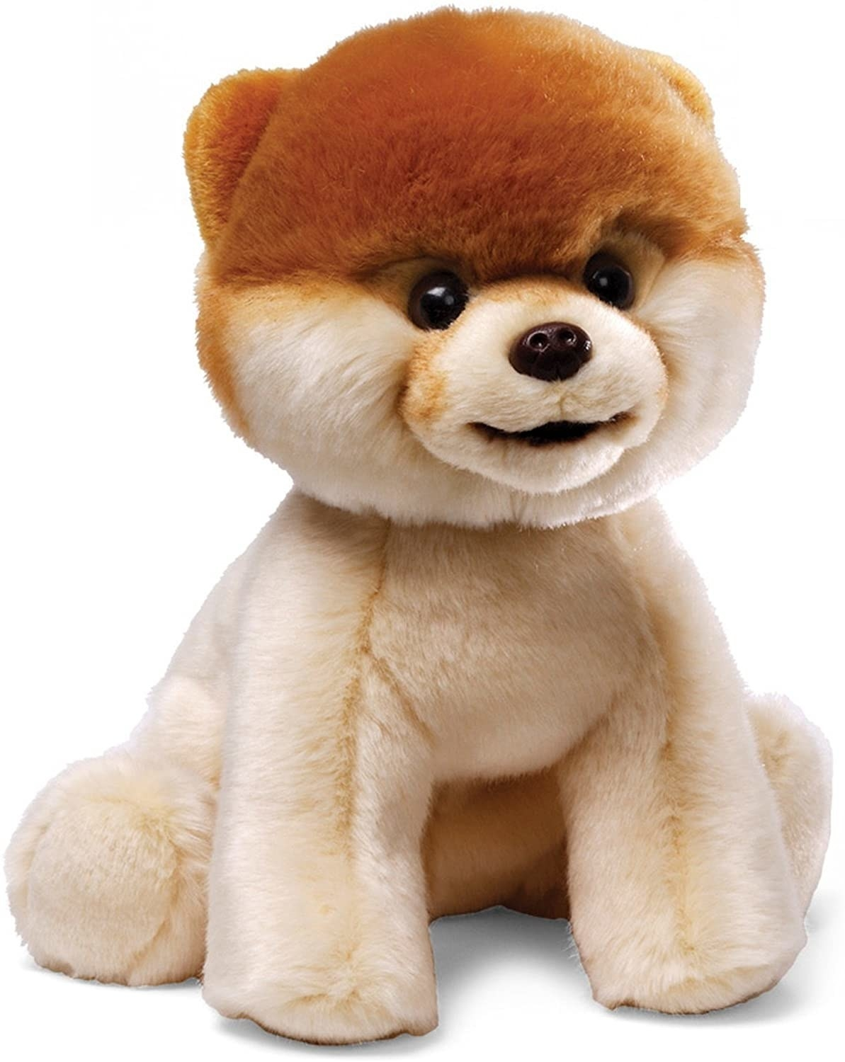 The plush Pomeranian