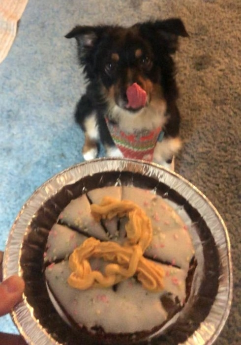 "A dog licking its lips as it looks at a ""pup-pie"""