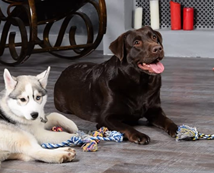 Two dogs sitting with multiple rope toys