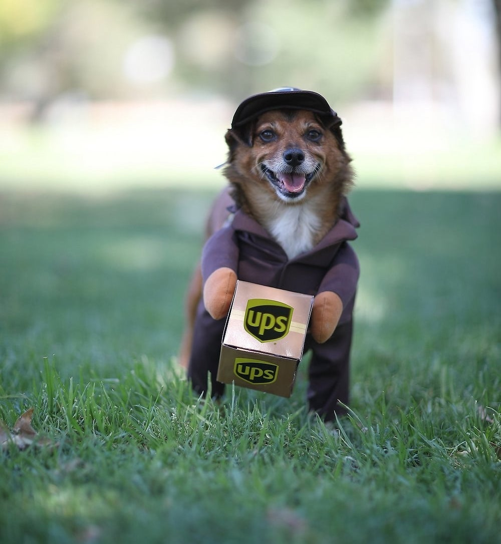 a small dog wearing a costume to make them look like a ups delivery person carrying a ups box