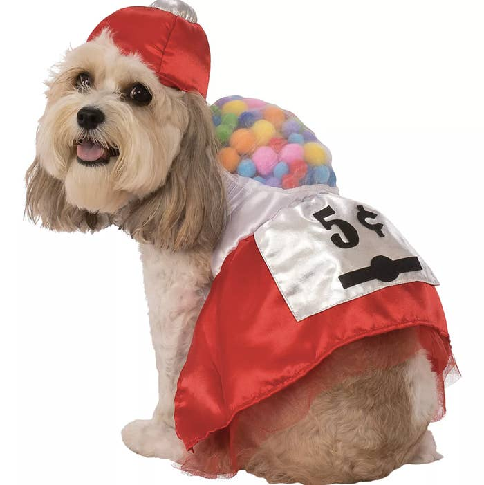 a dog showing off a red gumball machine costume