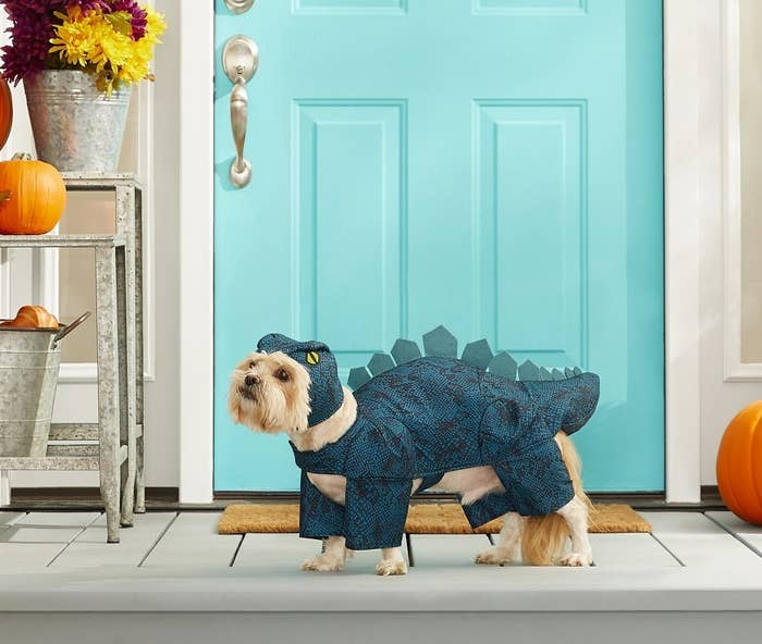 a small dog wearing a blue dinosaur costume
