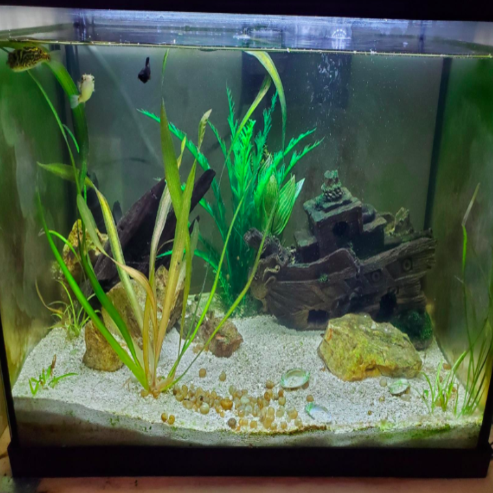 The same fish tank's walls now looking crystal clear after using the cleaning magnet