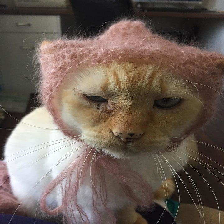 A reviewer's cat with an infection by their eye with a stain underneath the eye