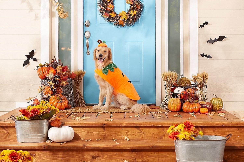 a golden retriever sitting on a front porch wearing a pumpkin costume