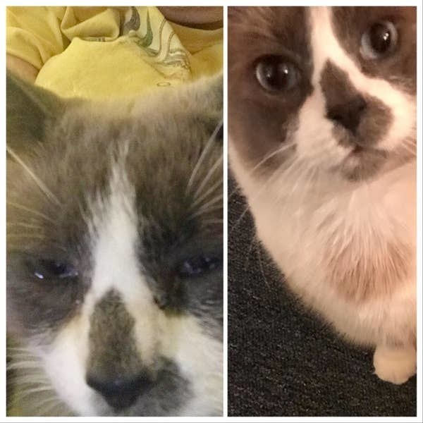 On the left, a reviewer's cat looking like its eyes and nose are running, and on the right, the same reviewer's cat no longer with running eyes and nose