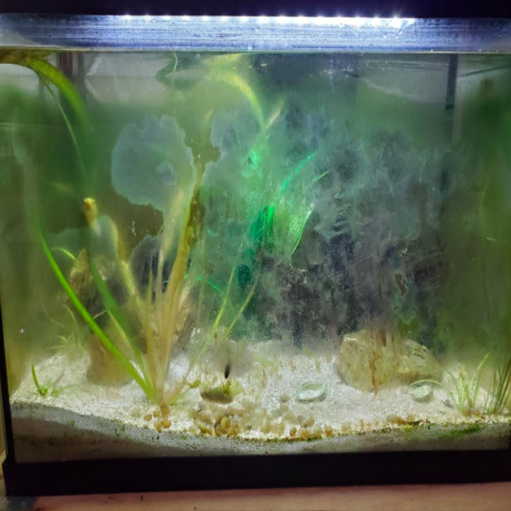 A fish tank's walls looking foggy from algae