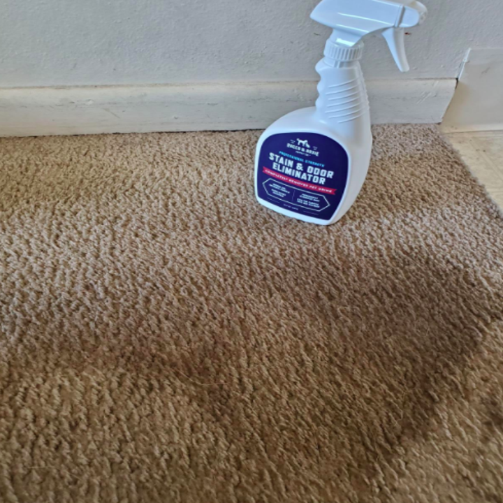 A before photo of a carpet looking dirty
